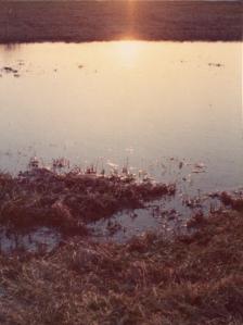 suninpuddle080