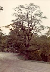 Tree on curve104