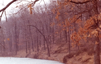 woods, ice heron lake